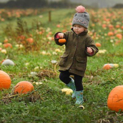 pumpkin-picking-2